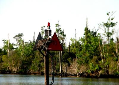 ICW marker, Albemarle & Chesapeake Canal