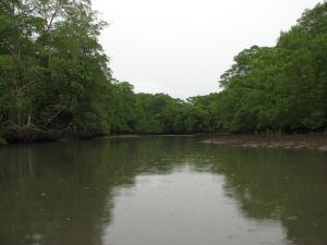 Rio Cacique, Isla del Rey, Panama